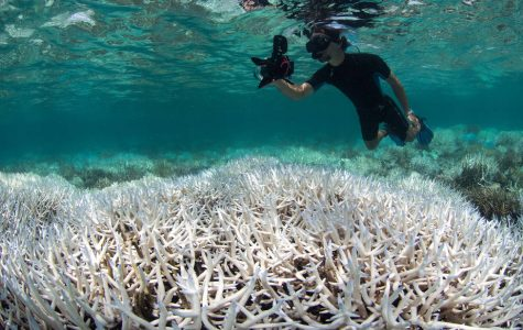 The Great Barrier Reef and Coral Bleaching