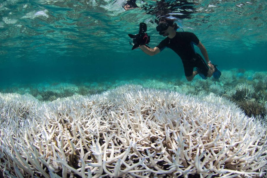 The+Great+Barrier+Reef+and+Coral+Bleaching