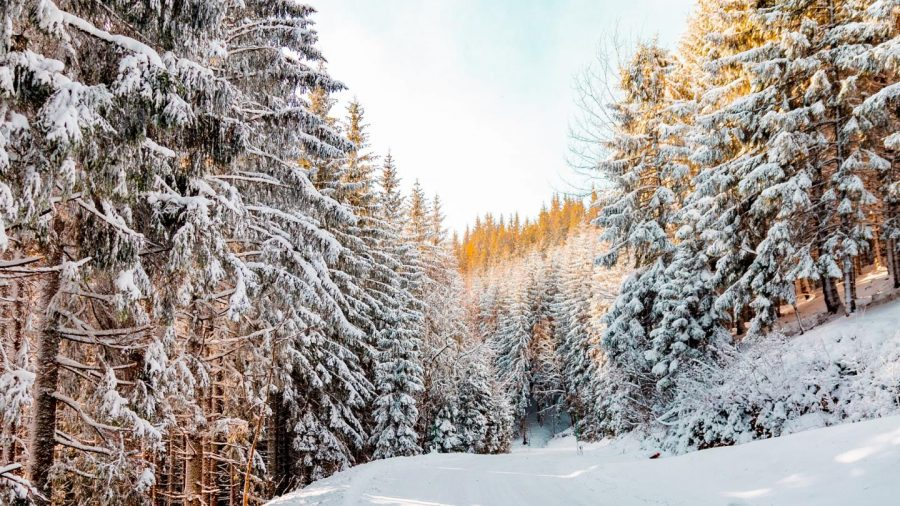 Winter+Themed+Journal%2FCreative+Writing+Prompts%3A