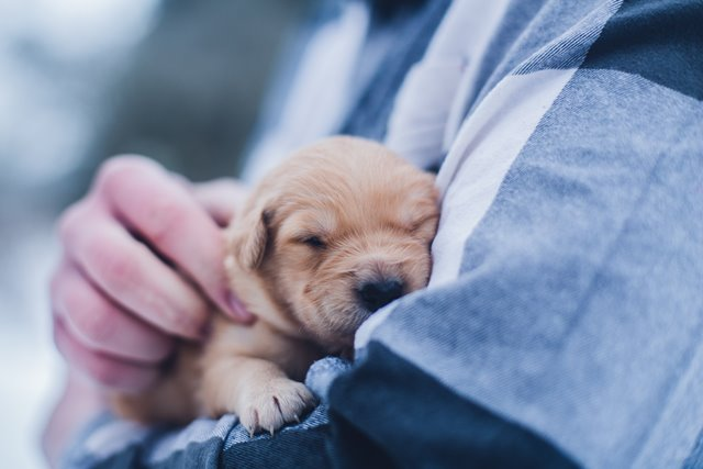 Separation Anxiety in COVID Puppies